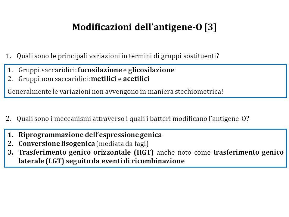 Modificazioni dell'antigene-O [3]